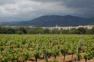 vineyards and dark skies over sant pere