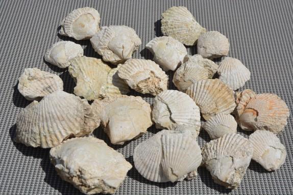 foix fossils