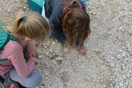 girls digging out fossil
