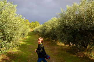 j in the olive groves
