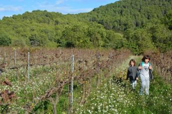 kids walking in vineyards