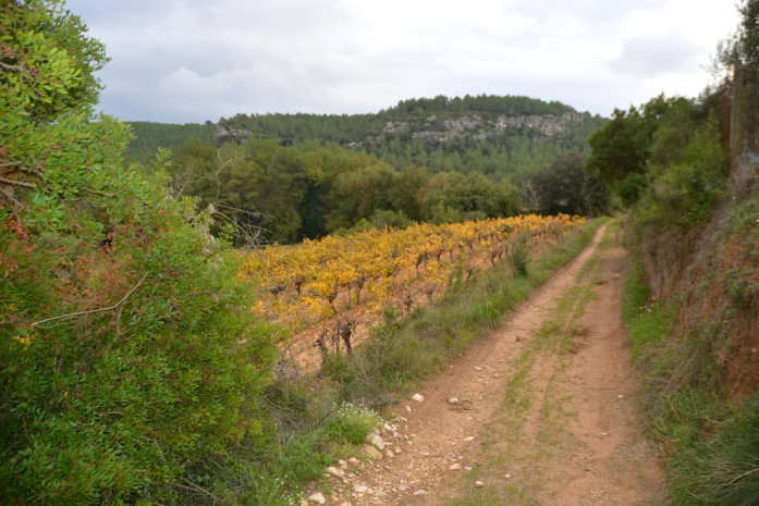 path with autumn vineyards