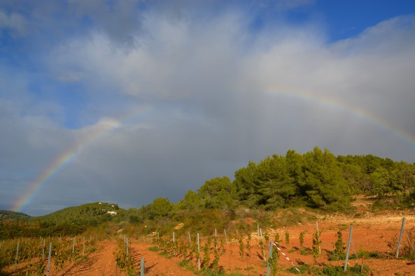 rainbow over vineyards