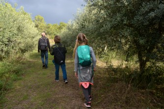 walking in the olive groves