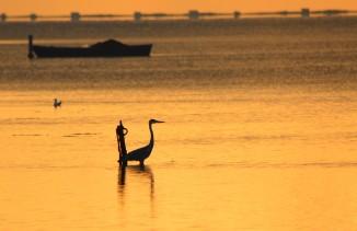 gray heron dawn silhouette