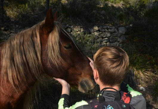 P stroking horse's nose