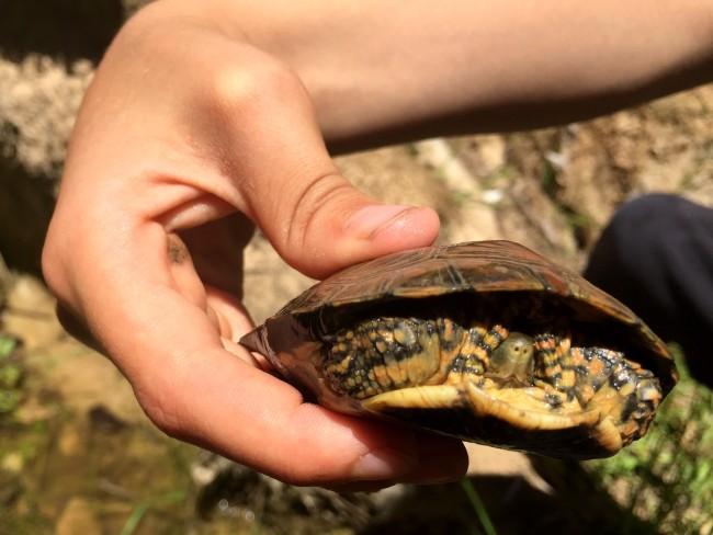joel holding turtle
