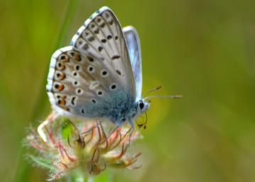 blue butterfly closeup