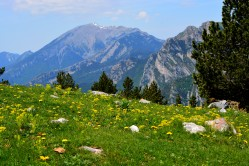 field of flowers with peaks