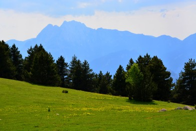 meadows trees and peaks