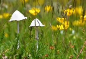 two white mushrooms2